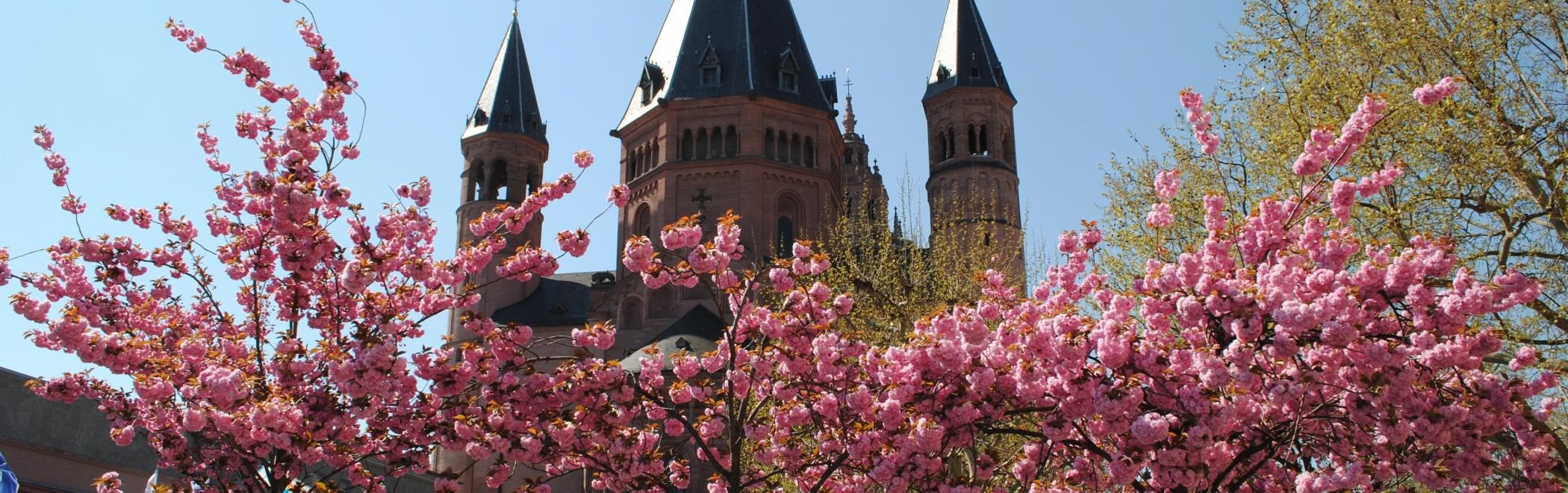 Rhein Dom Marktplatz blühende Bäume